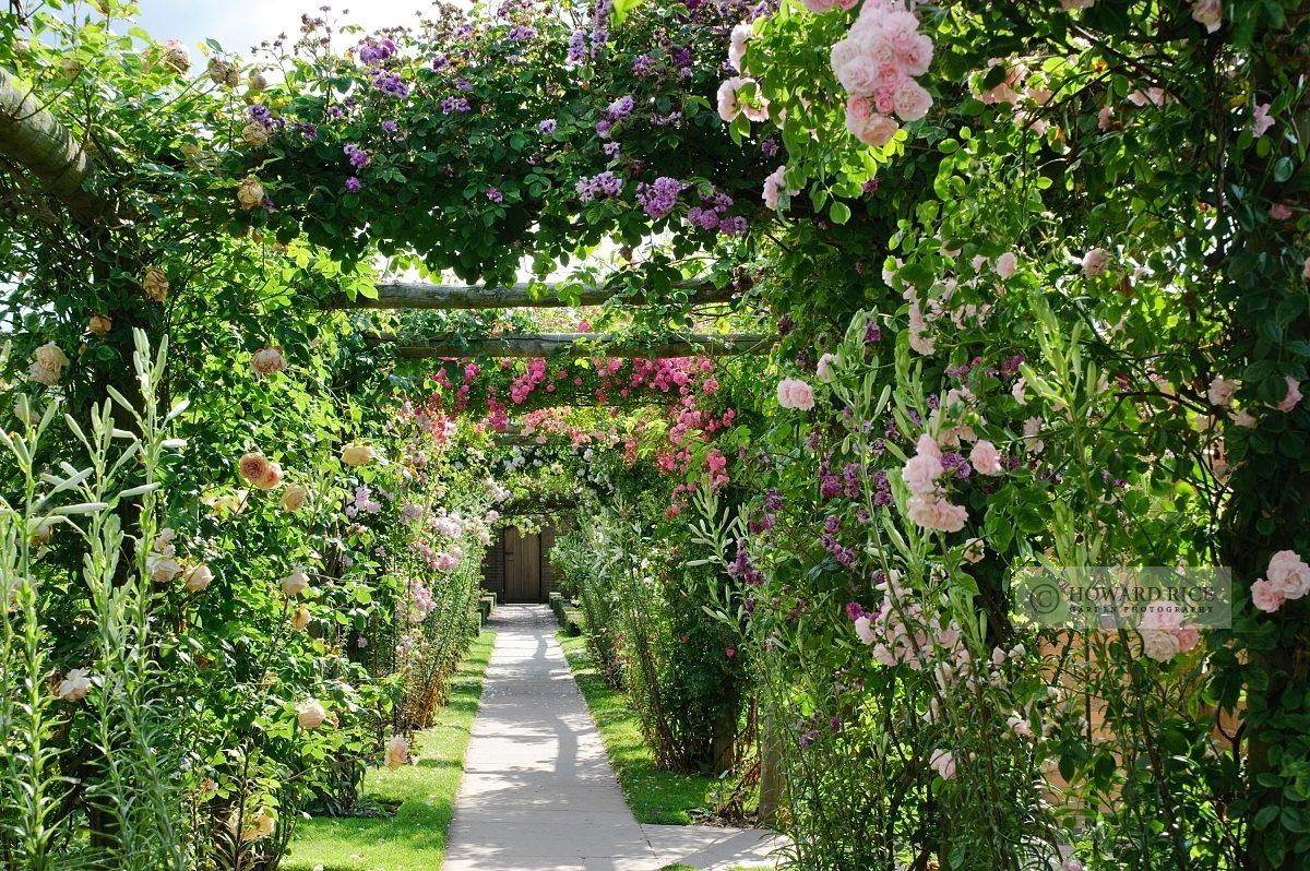 Rose covered pegola. David Austin Rose Gardens, Shropshire