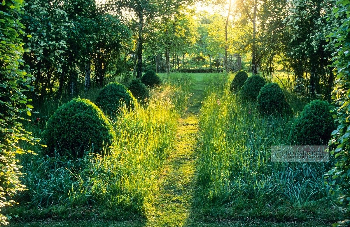 Mown path through longer grass and box topiary, backlit with evening sun - Hardwicke House, Fen Ditton, Cambridge