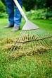 Woman raking moss from lawn